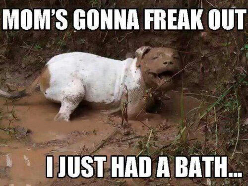 funny-mud-bath-dog