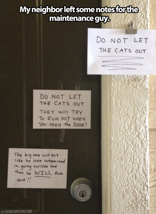Cat lady leaves some notes…