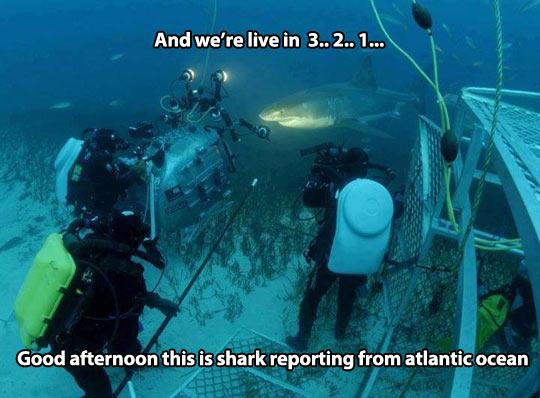 funny-news-live-shark-Atlantic-Ocean