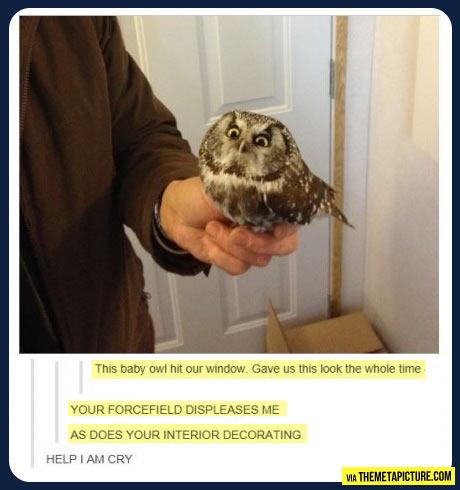 Displeased owl…