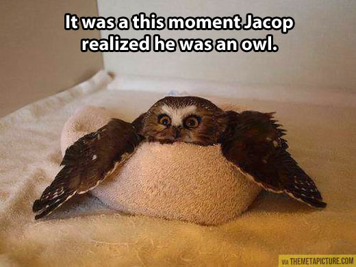 funny-owl-tired-towel