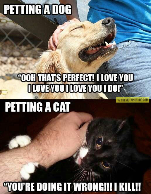 funny-petting-dog-cat-perfect-wrong