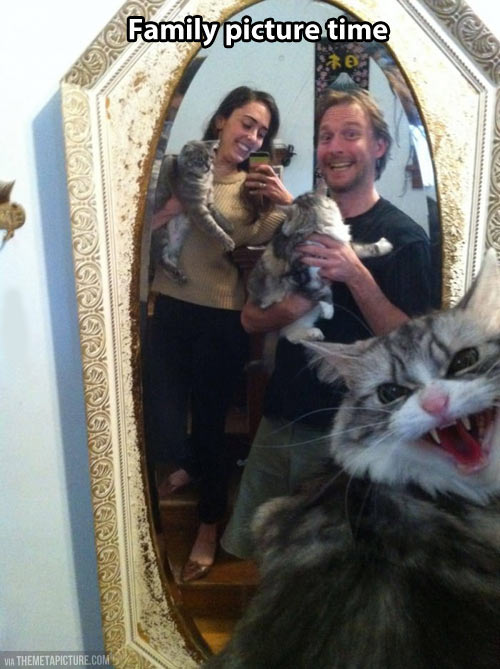 funny-photograph-family-cat-angry