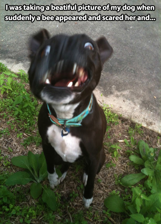 funny-picture-dog-beautiful-bee