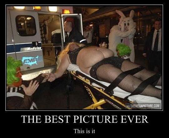 funny-picture-rabbit-ambulance-costume