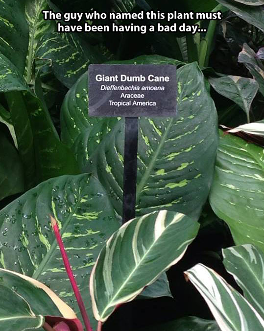 funny-plant-name-latin