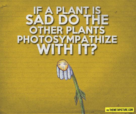 funny-plant-sad-sympathize