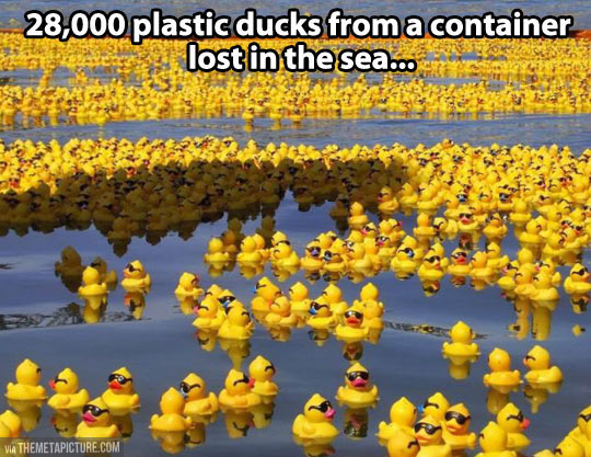 28,000 rubber duckies…