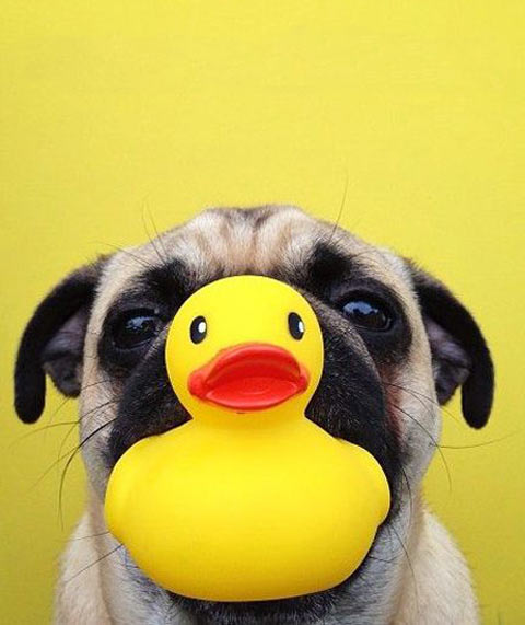 funny-puppy-duck-toy