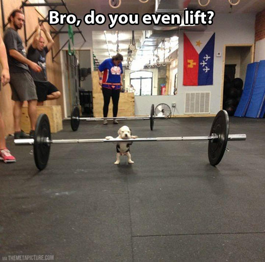 This puppy lifts…