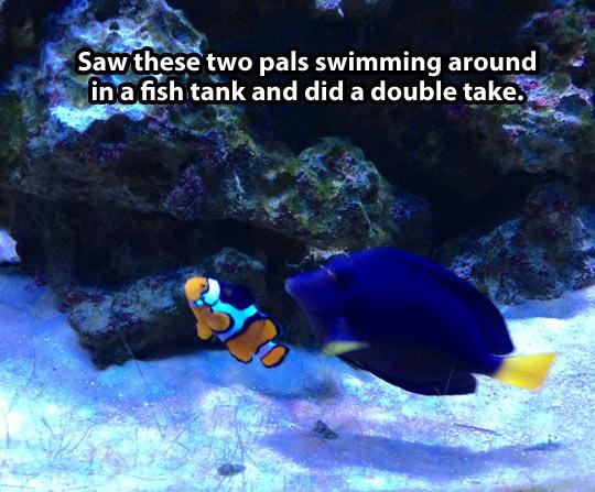 funny-real-Doris-Nemo-fish-tank