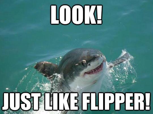 funny-shark-Flipper-water