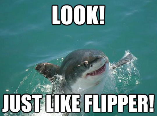 Misunderstood sharky…