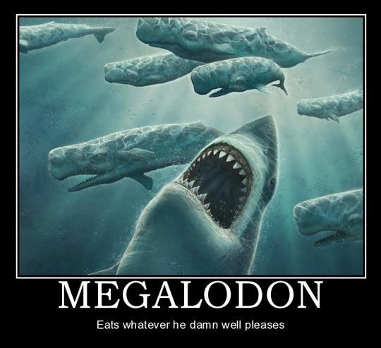 funny-shark-whale-sea