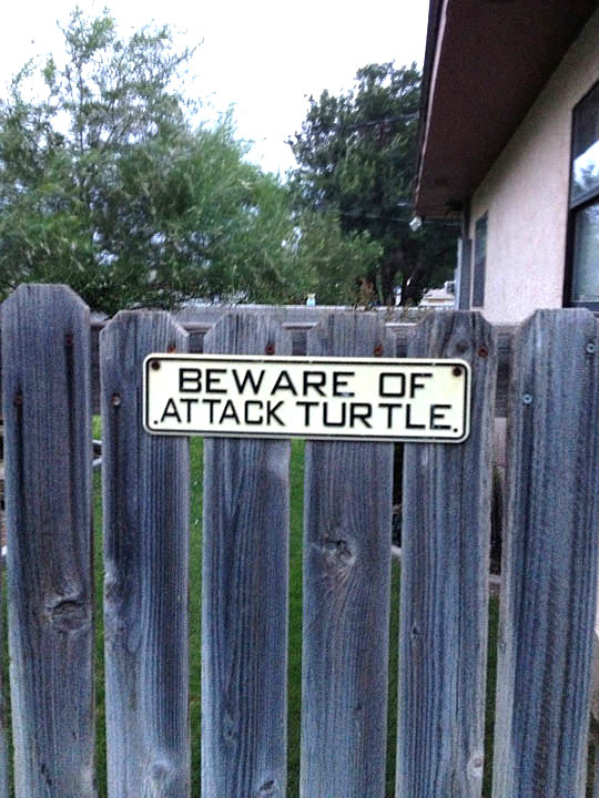 funny-sign-turtle-attack-house