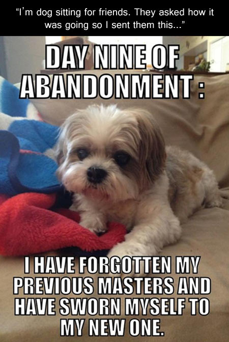 Forgetful puppy…