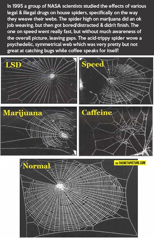 funny-spider-web-drugs