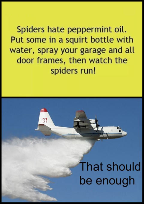 funny-spiders-plane-peppermint-oil