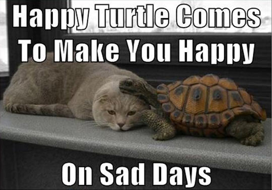 Happy turtle makes you happy…