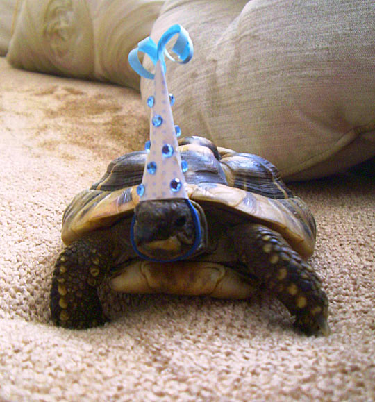 So this tortoise celebrated its birthday today…