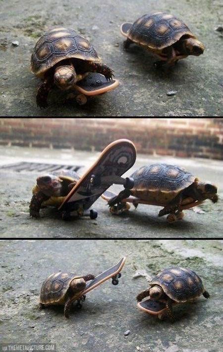 Turtles on skateboards…