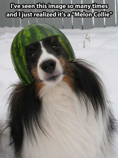 Melon collie?