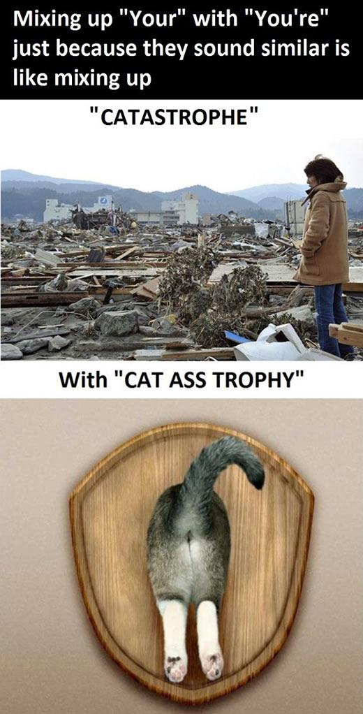 funny-words-mix-catastrophe-cat