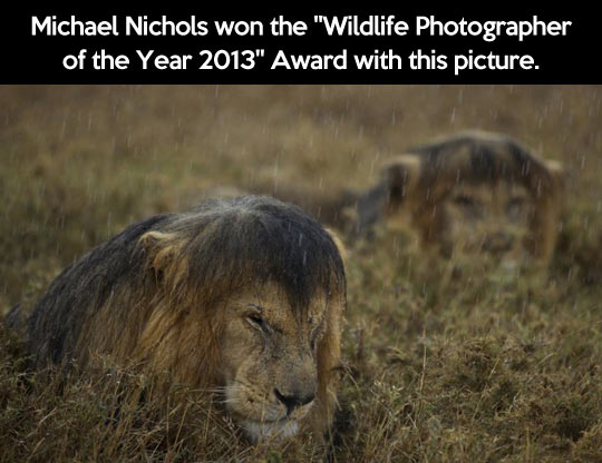 Wildlife Photographer of the Year…