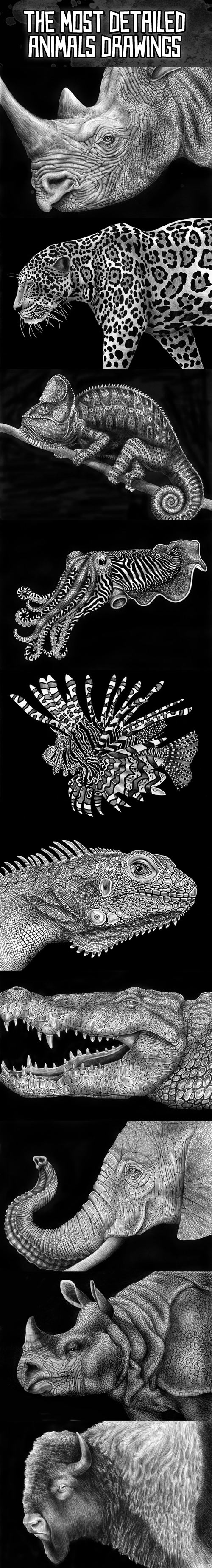 The most detailed animal drawings for Cool detailed drawings