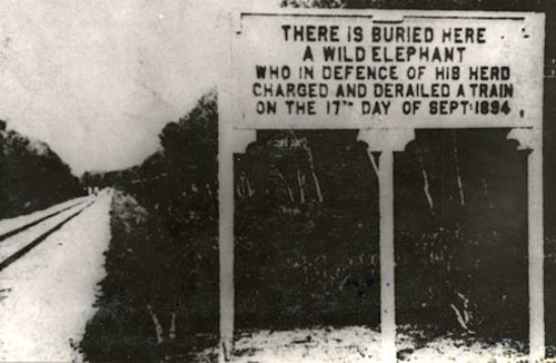 cool-elephant-train-buried-sign