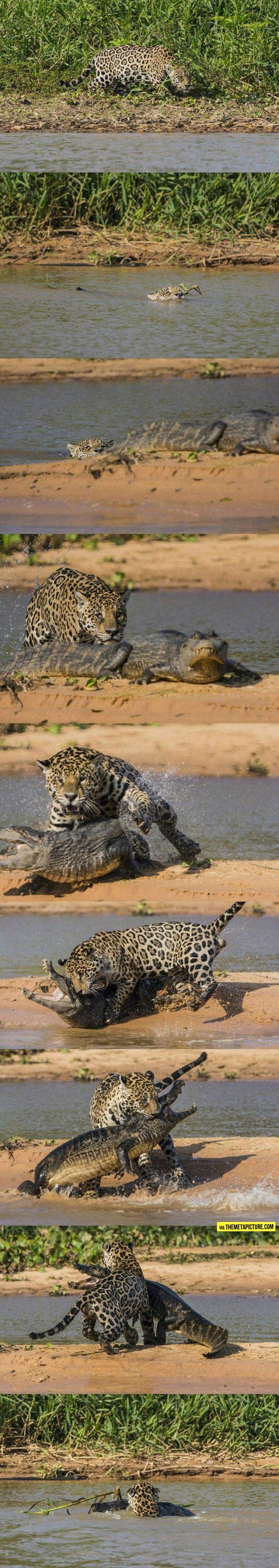 cool-leopard-eating-crocodile-river
