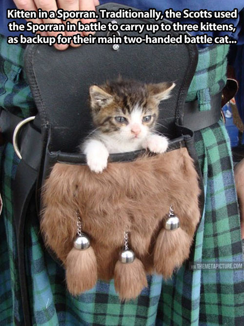 cool-little-cat-Sporran-kilt