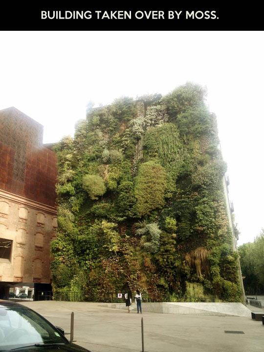 Like a moss…