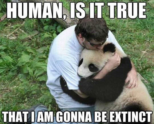 cool-panda-sad-extinct