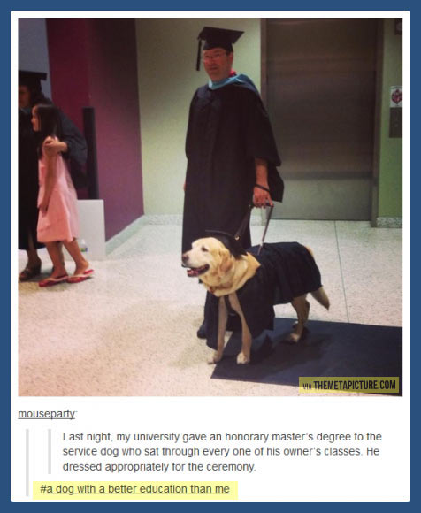 cool-service-dog-master-dressed