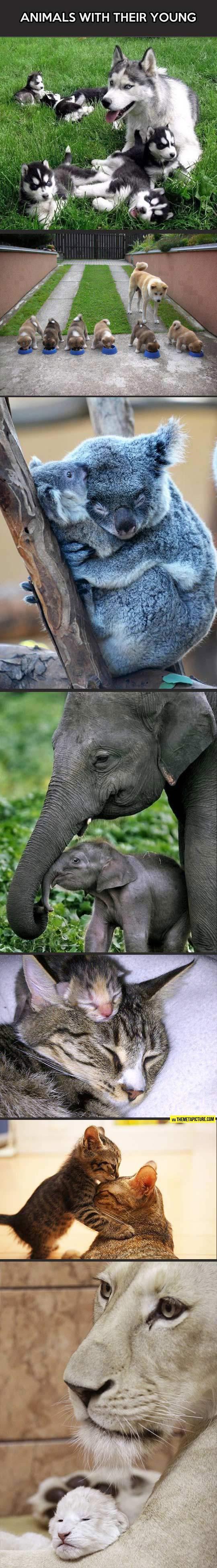 cute-animals-mothers-children
