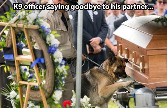 cute-dog-officer-goodbye-partner