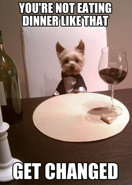 cute-dog-tuxedo-dinning-table