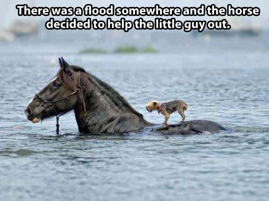 cute-flood-horse-dog-help