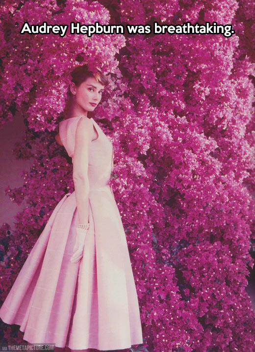 funny-Audrey-Hepburn-pink-tree