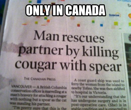 funny-Canada-news-cougar-spear