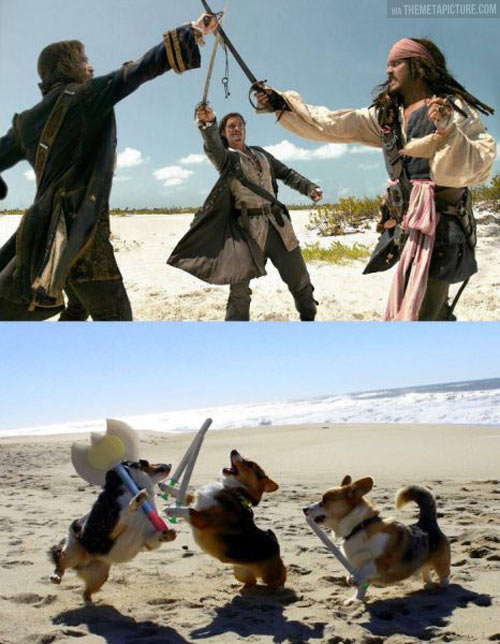 funny-Pirates-Caribbean-dogs-fighting