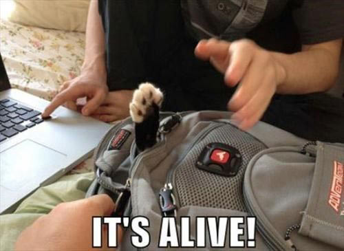 funny-Schrodinger-cat-alive-bag