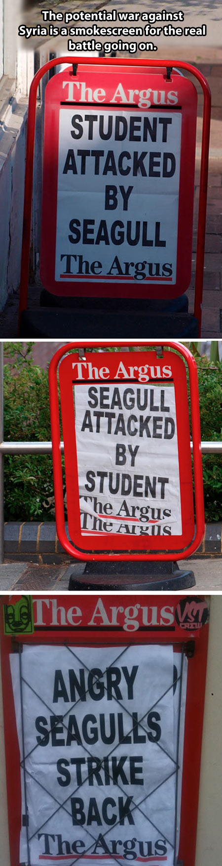 funny-Syria-cover-up-newspaper-seagull