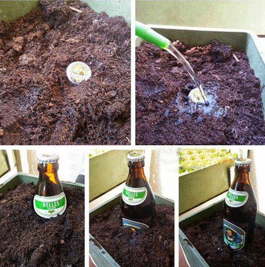 Beer seeds…
