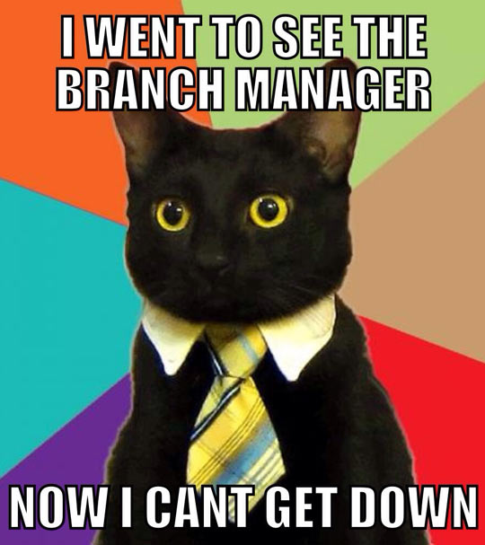 funny-business-cat-bow