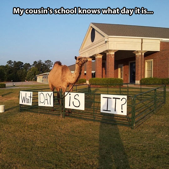 You know what day it is…