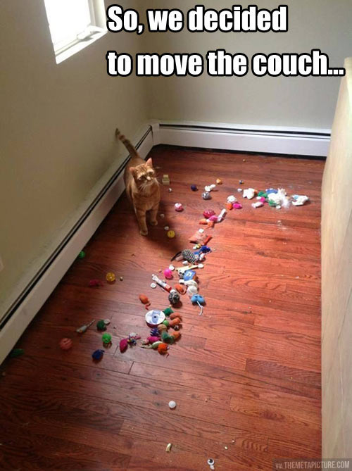 funny-candy-under-couch-cat