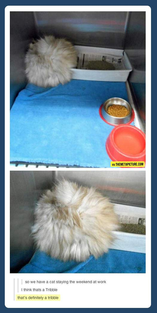 That's no cat…