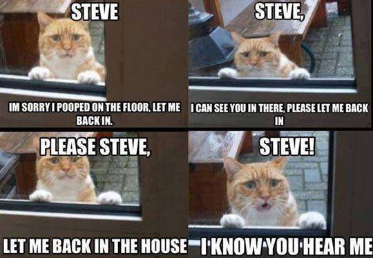 funny-cat-asking-come-in